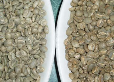 Best Coffee Beans For Home Roasting