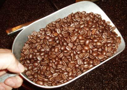 Scoop of Fresh Roasted Coffee