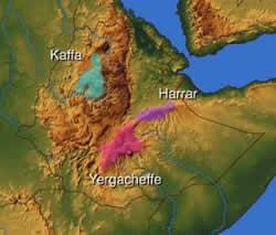 Ethiopia, Sidamo, Yergacheffe, Harrar